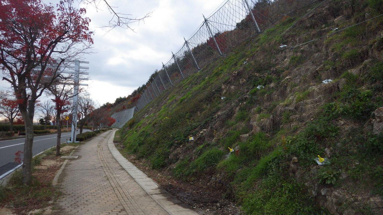 主要地方道広島空港本郷線道路災害防除工事(法面補修)